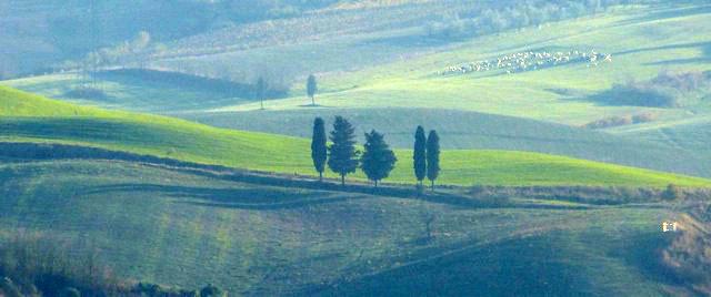pisa landscape 2